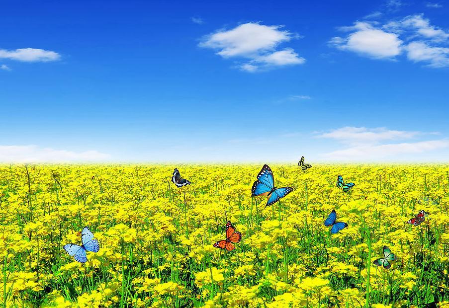 красивые фотографии лета: