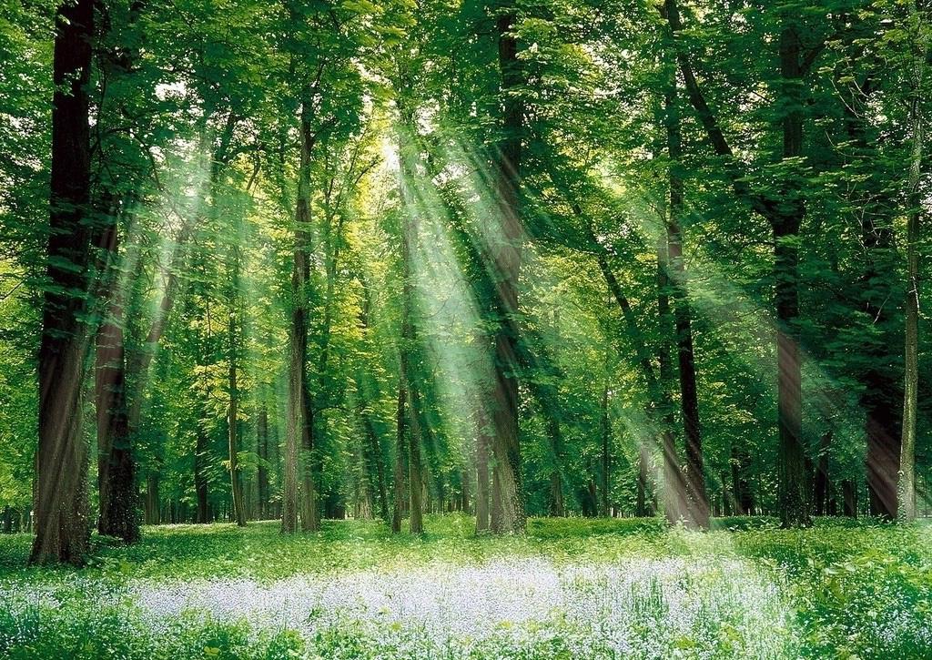 Картинки с изображением деревьев