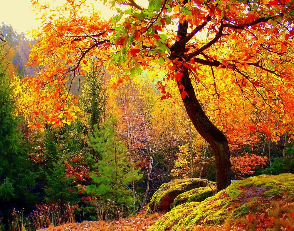 И желтой потрясающий пейзаж