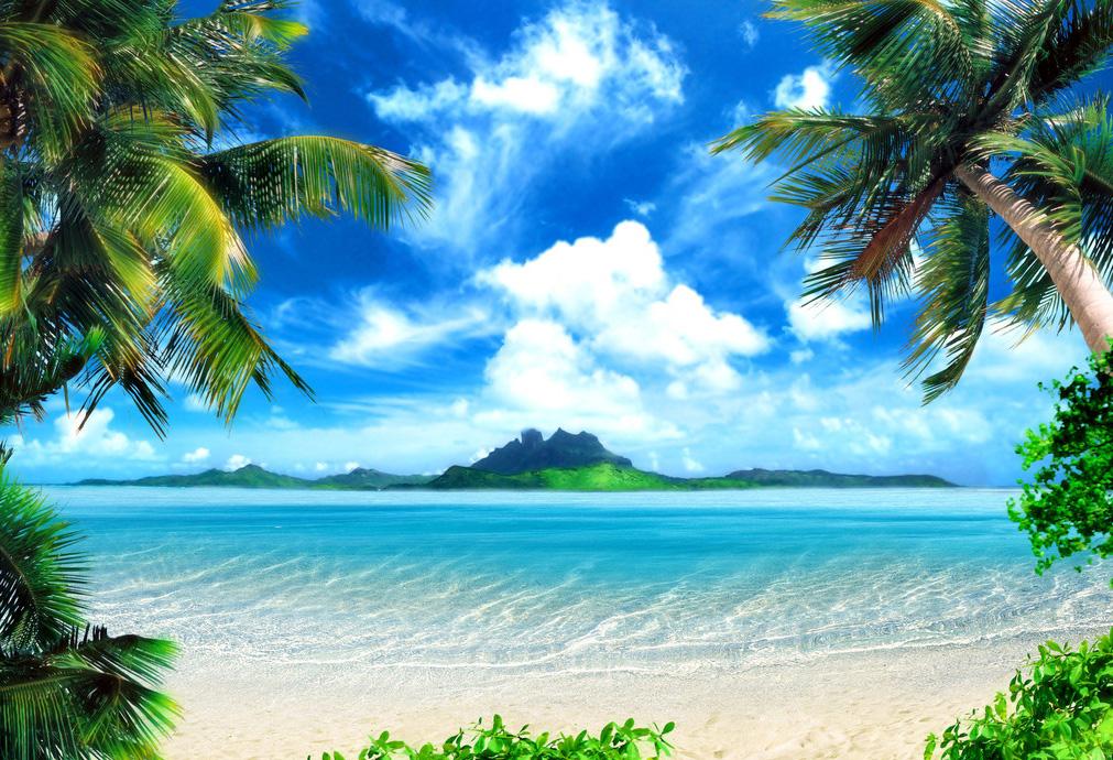 Картинка пляжа и моря с пальмами