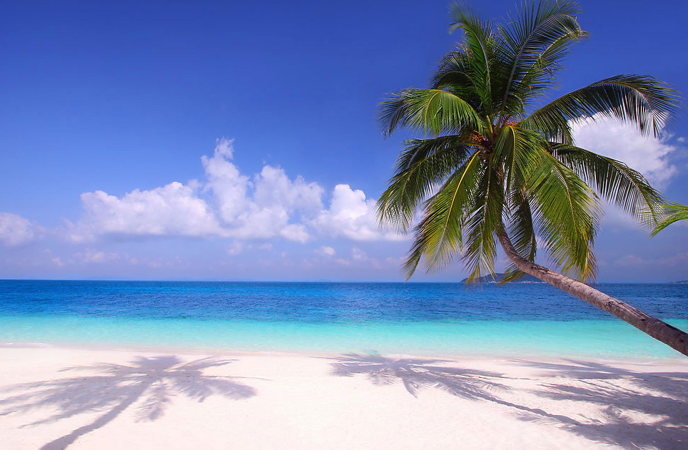 Обои песок море пляж солнце пальмы берег summer