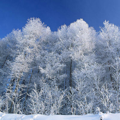Тёплое зимнее утро