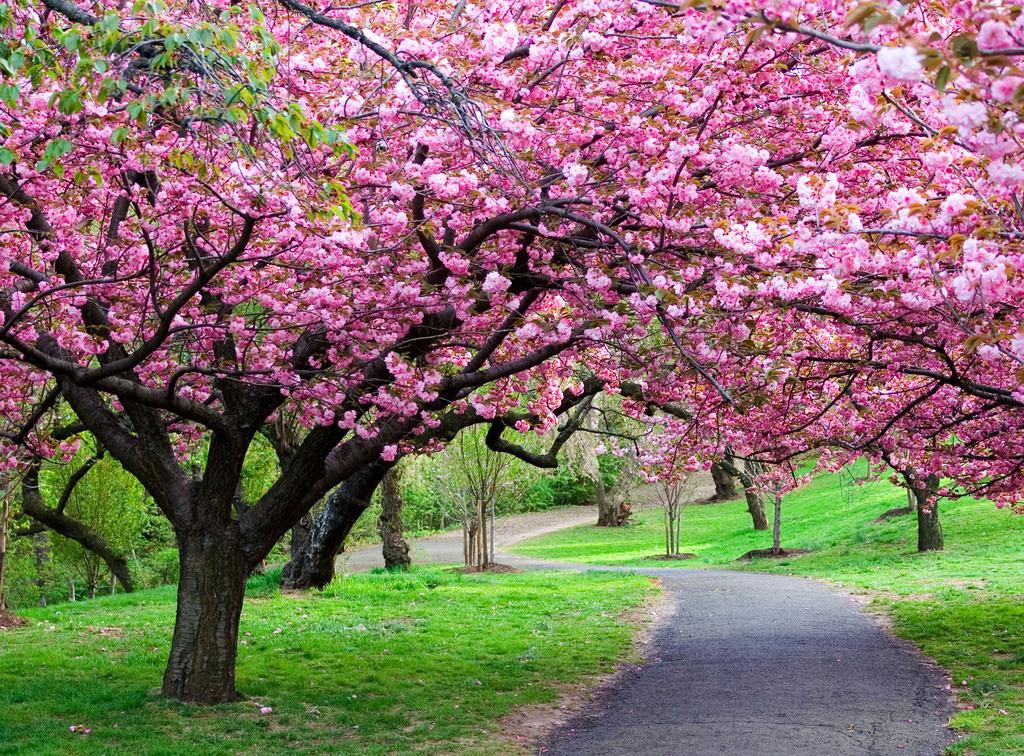 Пейзажи весна